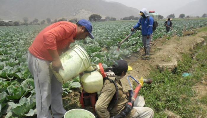 Huaral: Senasa recolectó casi 2 toneladas de envases de plaguicidas que estaban abandonados