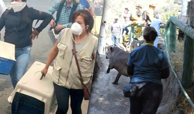 Ecuador: incendio forestal obligó a la evacuación de los animales de un zoológico