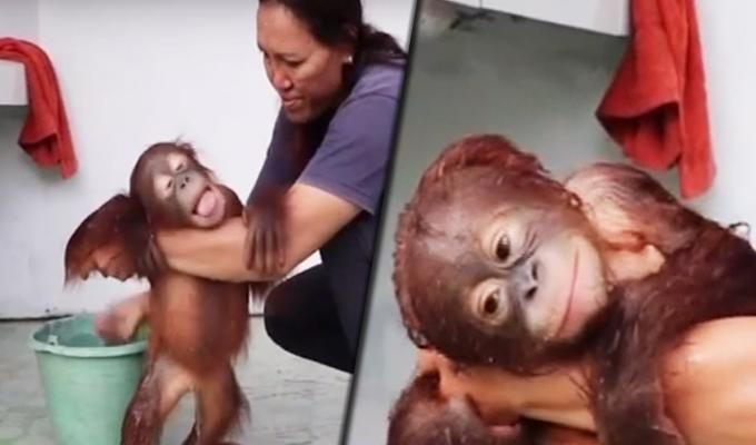 Indonesia: bebé orangután enternece las redes con su baño matutino