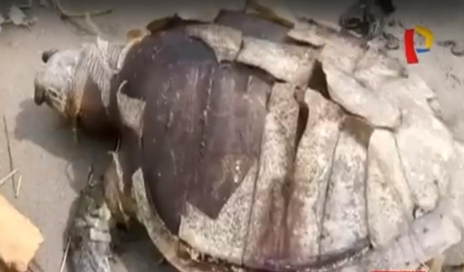 Indonesia: hallan muerta a tortuga con gran cantidad de plástico en su estómago