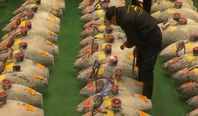 Japón: subastan un atún por 3 millones de dólares