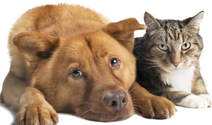 ¿Cómo podemos proteger a nuestras mascotas de un golpe de calor?