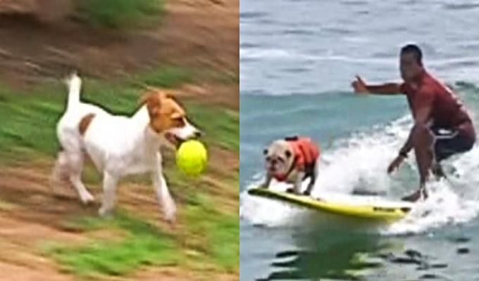 Verano de perros: estos son los mejores lugares para divertir a su engreído