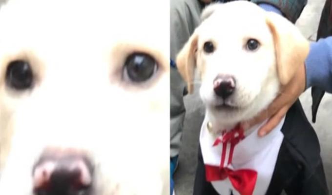 Trabajadores de almacén piden que delincuentes les devuelvan a sus 2 perros robados
