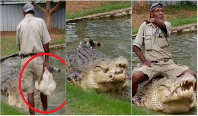 VIDEO: hombre alimenta a cocodrilo con un pollo vivo