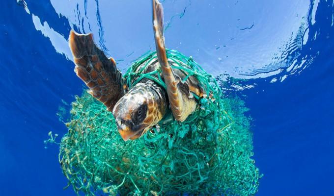 Descubre los seis hábitos necesarios para salvar los océanos