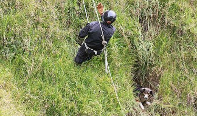 Jauja: perro que cayó por acantilado fue rescatado por bomberos y montañistas
