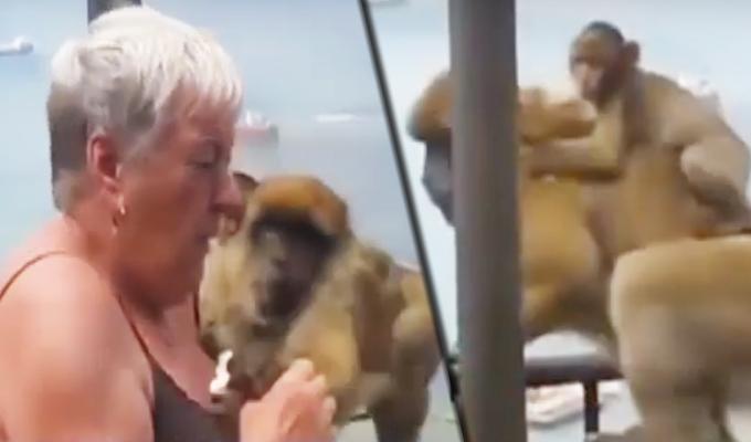 Mono con su cría se lanza sobre mujer para robarle un helado