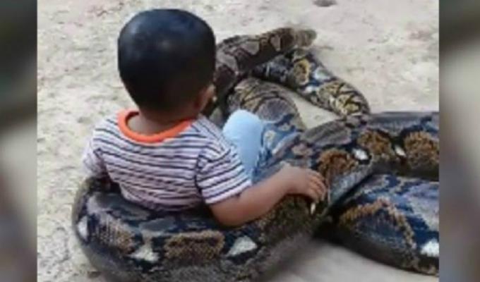 Captan a niño jugando con una pitón gigante en Indonesia