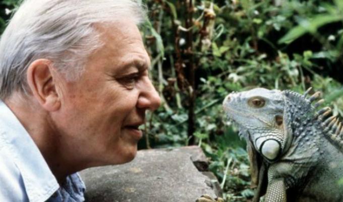 """David Attenborough: científico alerta que la vida salvaje """"está desapareciendo"""""""