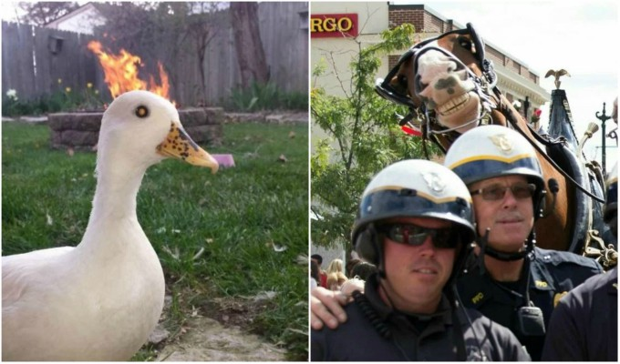 Estas son las fotos más divertidas con un fondo muy gracioso