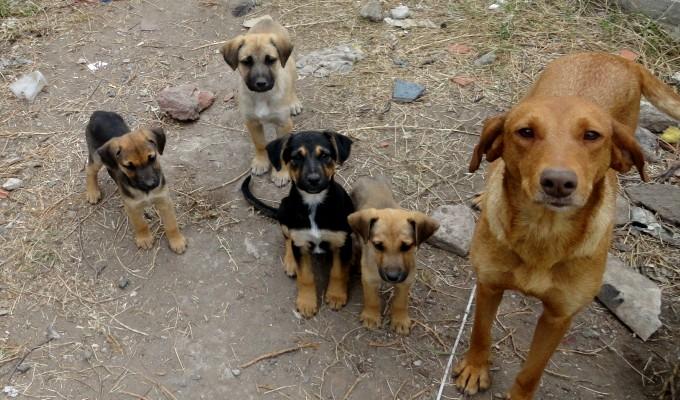 Miraflores: bus recorrerá calles para rescatar mascotas y darles refugio