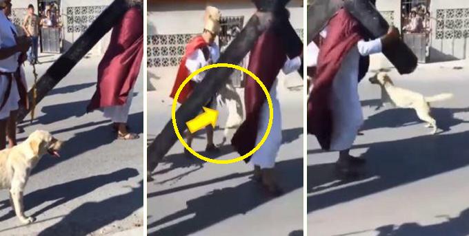 Perro defiende a 'Jesús' cuando era azotado en escenificación por Semana Santa