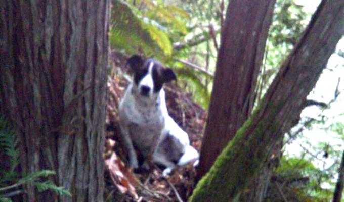 Perro guió a rescatistas hasta el cuerpo sin vida de su dueño
