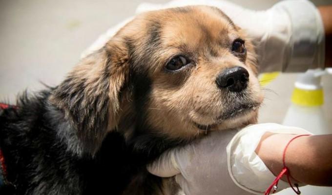Patatón 2019: regresa el evento benéfico a favor de perros y gatos en abandono