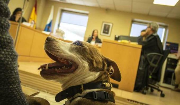 Un perro asistió como testigo a juicio por maltrato animal