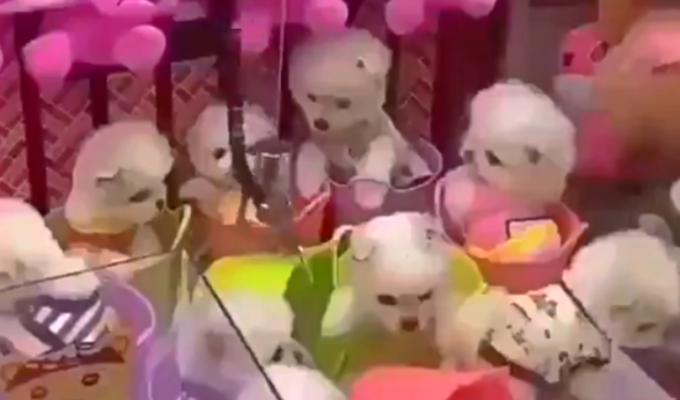Perros son utilizados como premios en máquina de peluches [VIDEO]