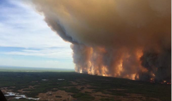 Más de mil hectáreas de un bosque han sido arrasadas por un incendio forestal