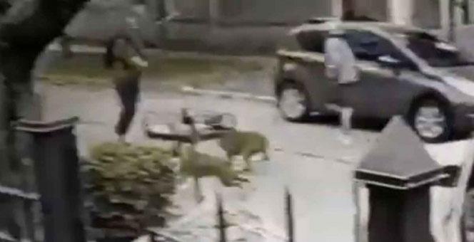 VIDEO: perros salvan a dueño de ser asaltado y hacen corren a ladrones