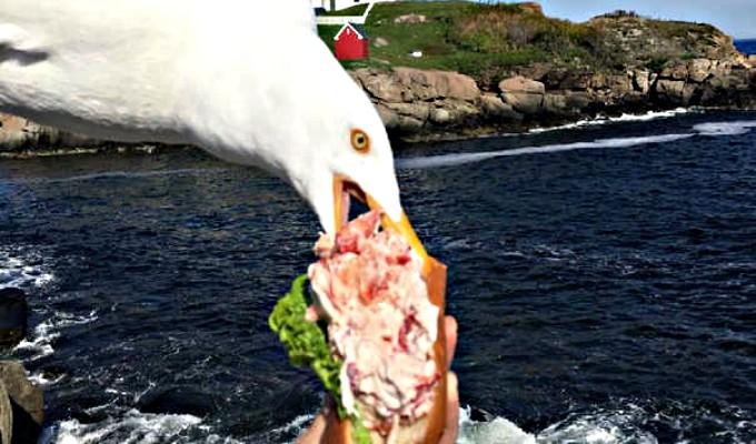 Gaviota es captada robando costoso sándwich a mujer