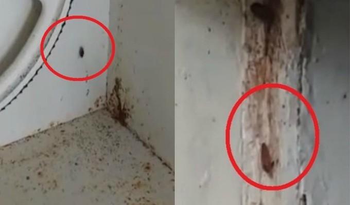 Tumbes: hallan cucarachas y excremento de roedores en cocina de hospital regional