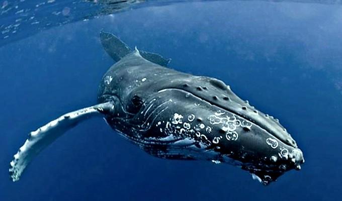 Brasil: inesperada ballena sorprende a un grupo de turistas