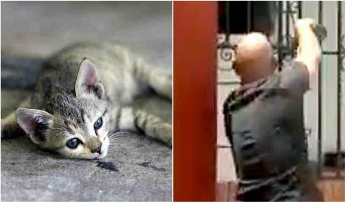 Hombre es captado colocando veneno en bebedero de gatos