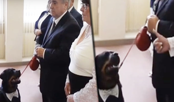 Perro interrumpe boda de una manera muy singular