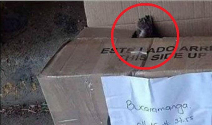 Perro murió asfixiado mientras viajaba como encomienda