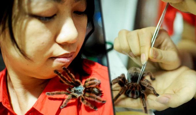 Colección extrema: en Indonesia una joven vive con más de 1.500 arañas