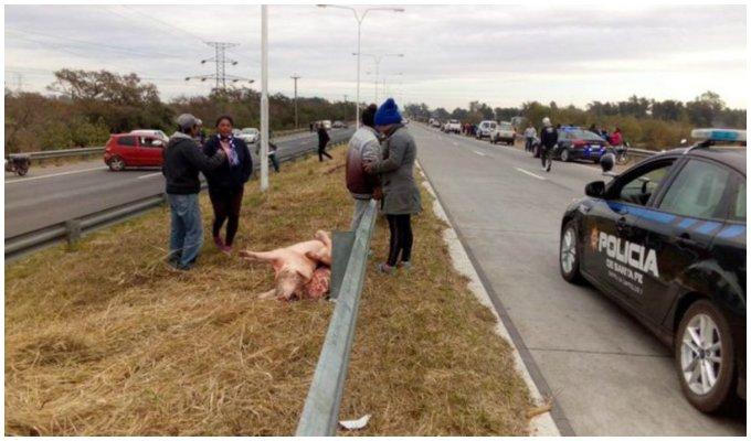 Argentina: saquean camión que transportaba carne de cerdo