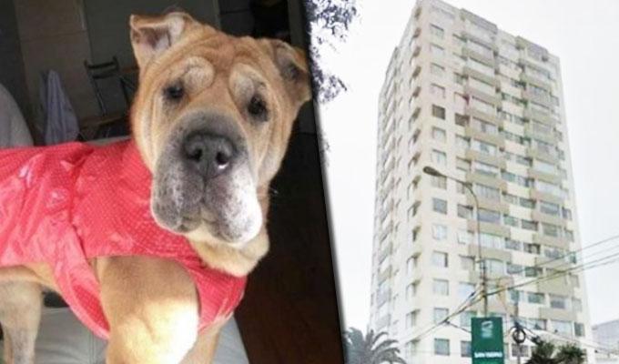 Magdalena: dueño de can gana proceso y ahora podrá subir con ella por ascensor