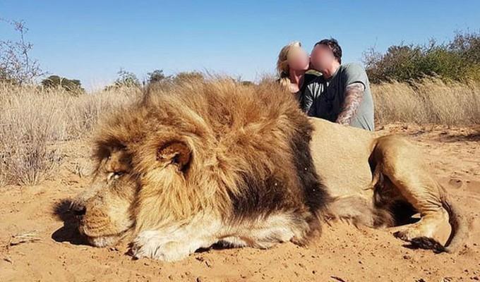 Indignante: pareja celebra la caza de león con un beso