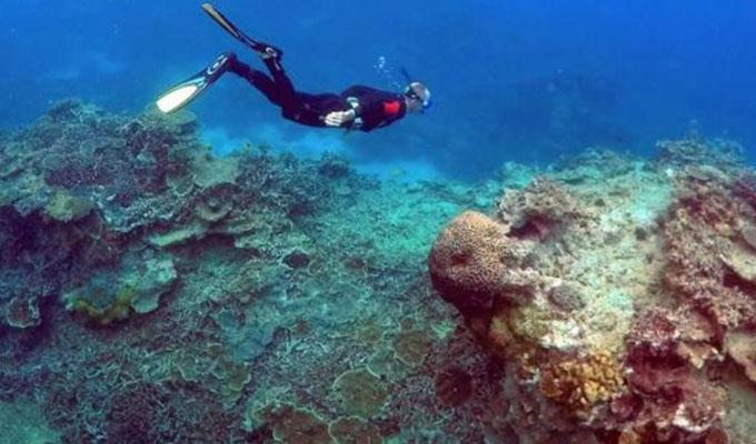 """Grecia: Buzos encuentran """"golfo de corales plásticos"""" en el mar Egeo"""