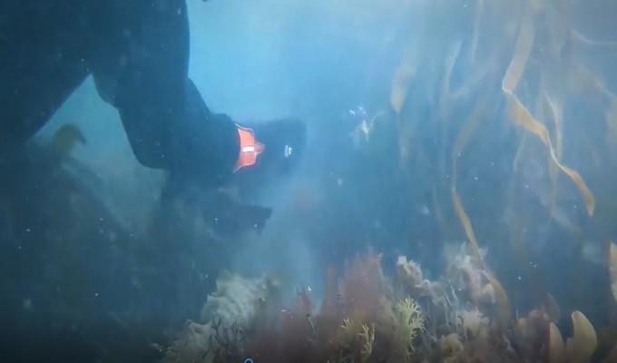 Mujer salva a tiburón atrapado en una red de pesca