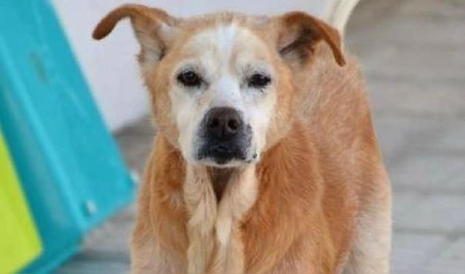 Cuco: conoce la conmovedora historia del perro que murió el mismo día que su dueña