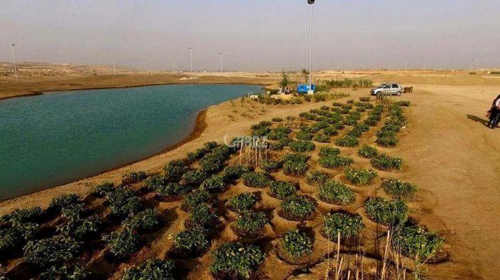 80 Kanal Industrial Land for Sale in Karachi Port Qasim