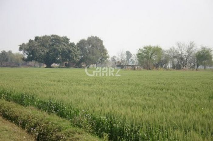 60 Kanal Agricultural Land for Sale in Mianwali Chak-4-db