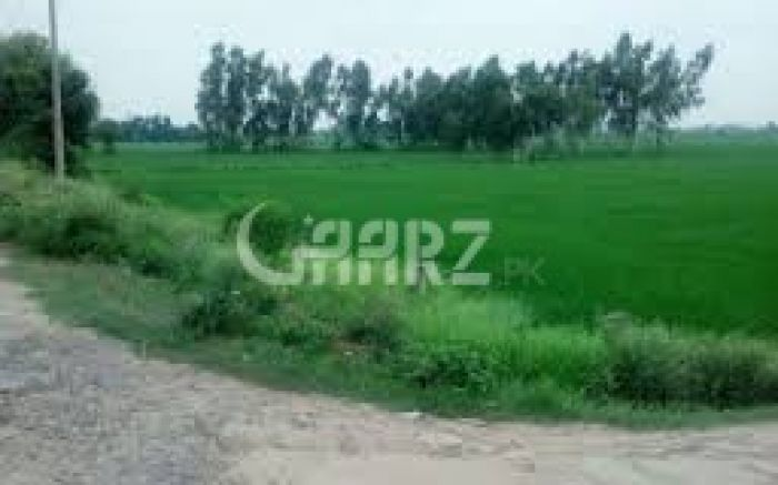 17  Kanal  Plot   For Rent  In Canal Road ,Faislabad