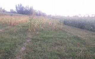 8  Marla Plot For Sale In  DHA Valley -DHA Defence, Islamabad