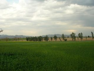 11  Marla Plot For Sale In  G-13, Islamabad