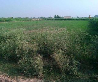 8  Marla Plot For Sale In  Multi Residencia & Orchards, Islamabad