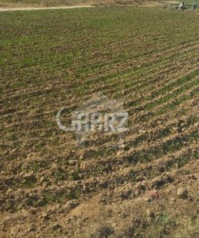 48 Kanal Agricultural Land for Sale in Sargodha Chak No-19 Nb