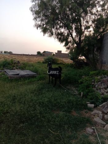 30 Kanal Agricultural Land for Sale in Fateh Jang Khor Road Near Dhok Syedan