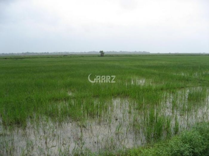 392 Kanal Agricultural Land for Sale in Thatta Jarr Village