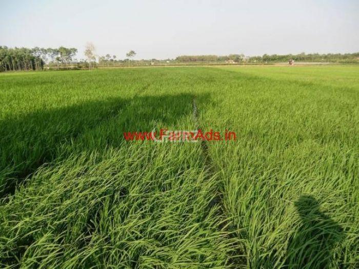 80 Kanal Agricultural Land for Sale in Sargodha Jhamrah Shahnikdar Sillanwali