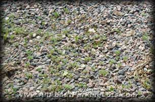 weeds growing in a gravel parking lot