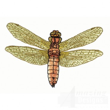Olive Dragonfly