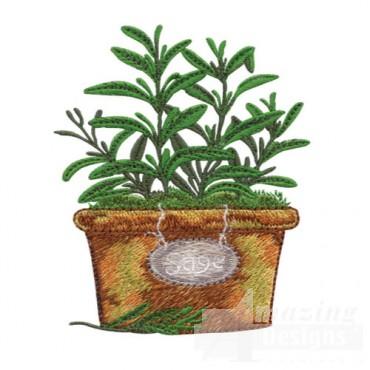 Pot Of Sage
