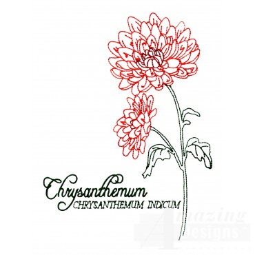Large Chrysanthemum Indicum Embroidery Design